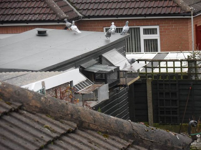 Topnotch Pigeon Loft Ventilation - Flettner Ventilator VX41