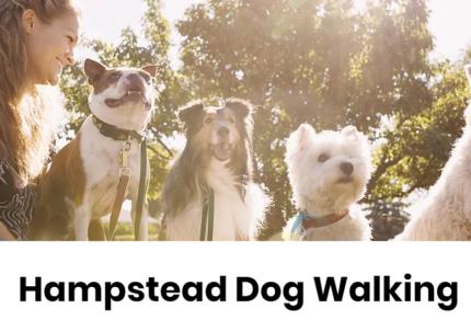 Hampstead dog walking
